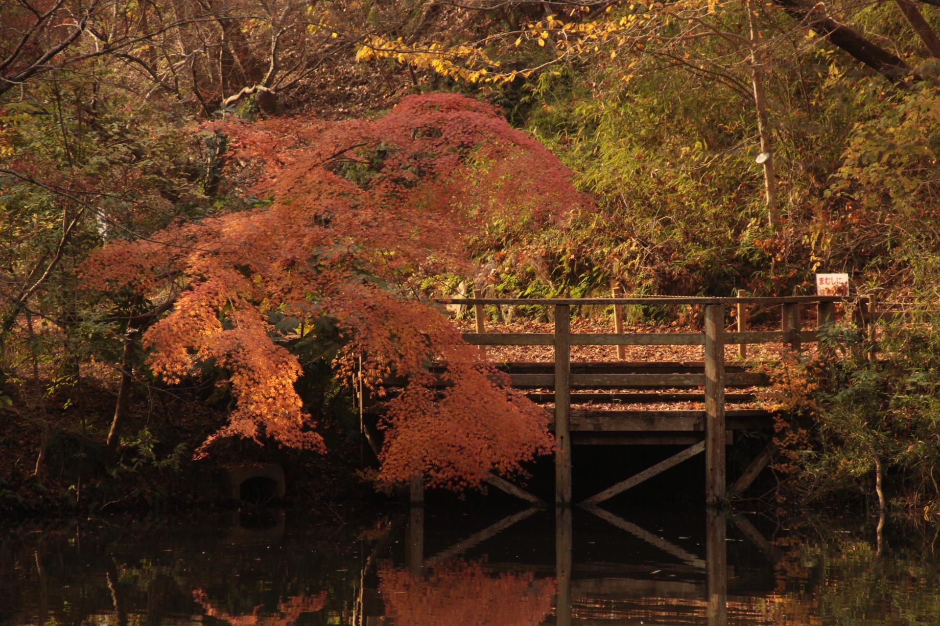 泉自然公園